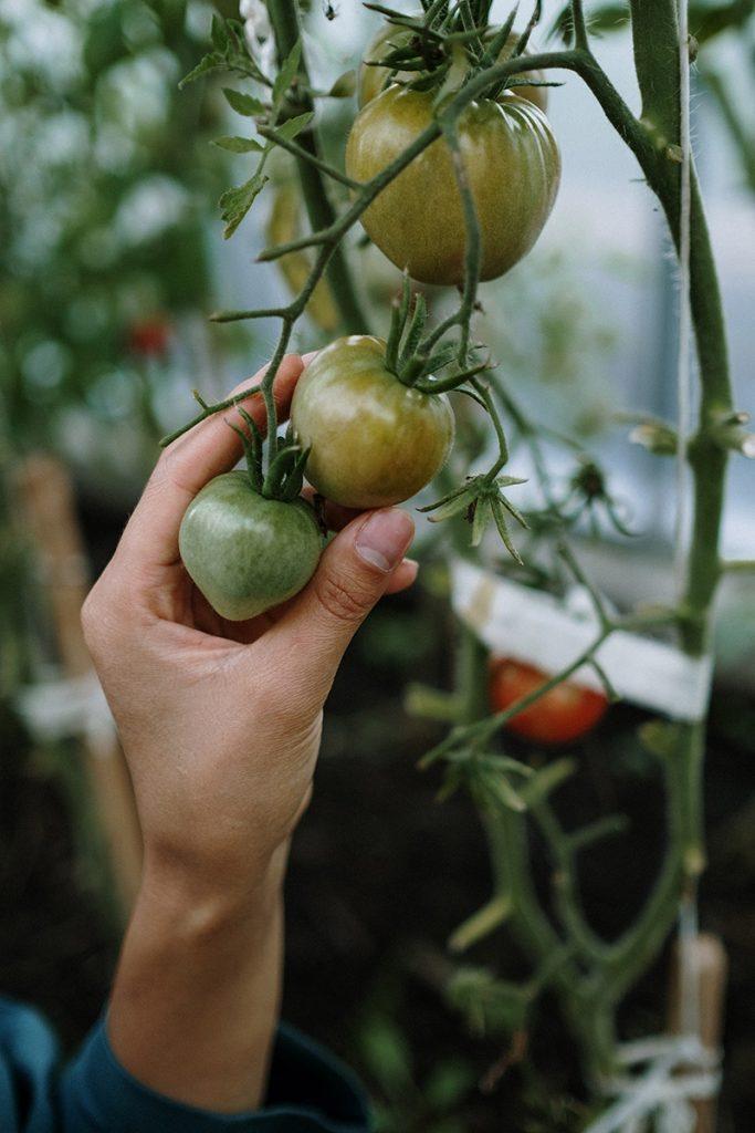 Growing a garden with e-commerce web design