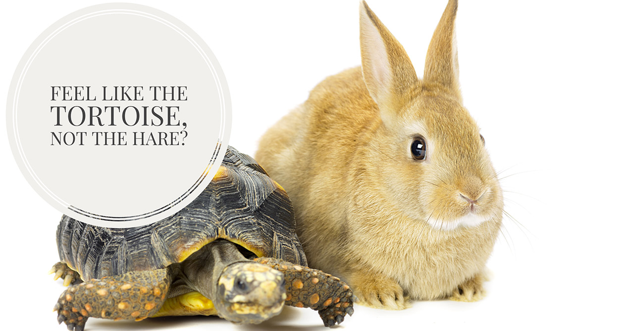 Small Business Website Quick Start Packages | Are you the Tortoise or the Hare?